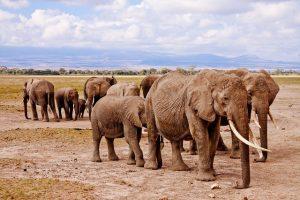 Wakacje w styczniu - Kenia